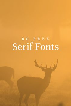 60 Free Serif Fonts to Give Your Designs a Traditional Touch