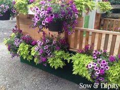 10 Planter and window box Design ideas