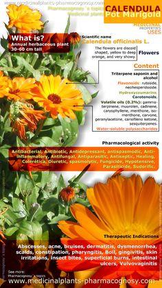 Calendula pot marigold health benefits