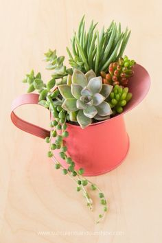 Find out how to use the thriller filler spiller method in your succulent arrangements