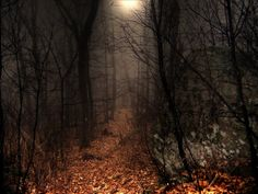 the Appalachian Trail by moonlight