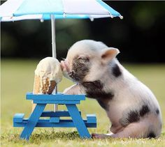 Pig. Ice Cream. Picnic Table. So cute.