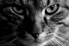 Cat Black and White by fucute