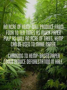 Hemp. One tiny use out of tens of thousands that we know of.