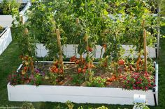 Sweet Stories, Growing Plants, Veronica, Good To Know, Solar, Home And Garden, Raised Beds, Cottages, Gardening