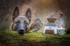 Fotógrafo Tanja Brandt registra a amizade de seu cão e uma coruja