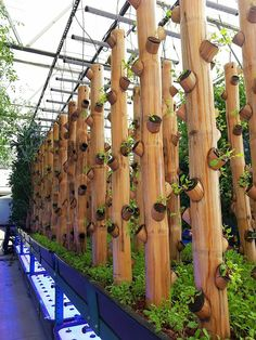 Bamboo gardening greenhouse with hydroponics                              …
