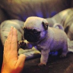 Oh hellll yeah. High five, lil' bud. | 25 Photos Of The Cutest Photos That Ever Cuted