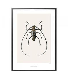 Hagedornhagen Poster met insect B2 Batocera wallacei