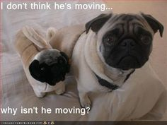 I don't think he's moving... why isn't he moving? - Cheezburger