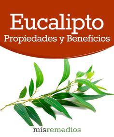 #Eucalipto - Propiedades y Beneficios #PlantasMedicinales