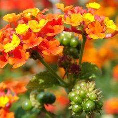 Zobacz, które rośliny kochają słońce i z łatwością zadomowią się na Twoim balkonie.