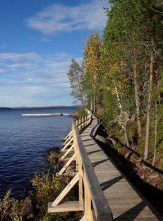 Pitkospuita ja venelaituri Orhinselänniemen hiekkasärkän vieressä Pellon Miekojärvellä Länsi-Lapissa