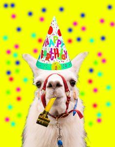 molly llama | Prana's 6th Birthday Extravaganza! — Prana Holistic