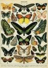 This lovely print features a collection of butterflies marked with scientific names. A wonderful vintage design to use as gift wrap or frame as art. Printed on Italian acid free paper. By Cavallini & Co.Please note: Given the delicate nature of Paper Source, Vintage Designs, Decoupage, Gift Wrapping, Butterfly, Nature, Prints, Poster, Painting