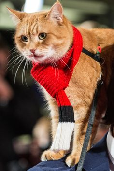 Resultado de imagem para pictures of James bowen and Bob Cute Cats And Dogs, I Love Cats, Cats And Kittens, Cats 101, A Cat Named Bob, Street Cat Bob, Cat Anatomy, How To Cat, Maine Coon Cats