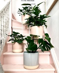 """norsu interiors on Instagram: """"So we not-so-secretly, can't get enough that the beauties @milksugarmelb now do their stunning pots in BLUSH!! 😍"""" Planter Pots, Blush, Interiors, Canning, Beauty, Instagram, Rouge, Decoration Home, Decor"""