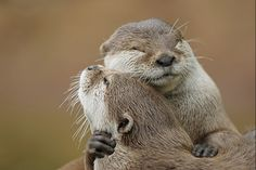Let me hug you, bring it in... Yea, feel the love? Because I love you...