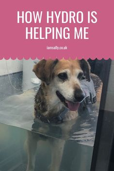 How Hydrotherapy is Helping Me. Baby Dogs, Dogs And Puppies, Food Dog, Pet Food Storage, Dog Health Care, 7 Year Olds, Health And Wellbeing, Help Me, Guinea Pigs