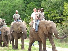 Want to see a bit of wildlife in action? Enjoy this photographic safari of our great Kruger Park images. South Africa Holidays, Elephant Ride, Kruger National Park, Countries Of The World, Safari, Places To Go, Wildlife, Bee, Bucket