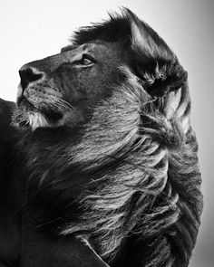 Always in the wind. By professional photographer, Laurent Baheux, France