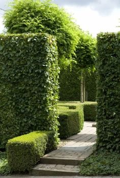 17 Catchy American Boxwood Landscaping That Easy To Managed Boxwood Landscaping, Boxwood Garden, Garden Hedges, Boxwood Hedge, Topiary Garden, Driveway Landscaping, Garden Path, Farmhouse Landscaping, Tropical Landscaping