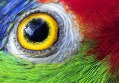 Community Post: 15 Parrot Eyes Really Close Up