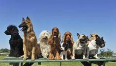 group-dog-training-photo