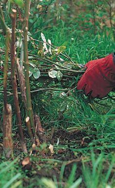 Střiháme růže: obr. 3 (READERS DIGEST VÝBĚR) Gardening, Lawn And Garden, Horticulture