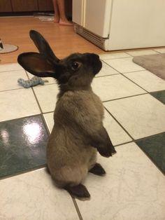 Meet Carter, an adoptable bunny!