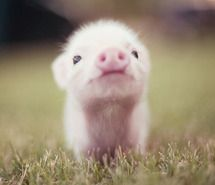 I'll be happier than a new born pig in the sunshine eating slop on a Sunday when summer gets here!!!