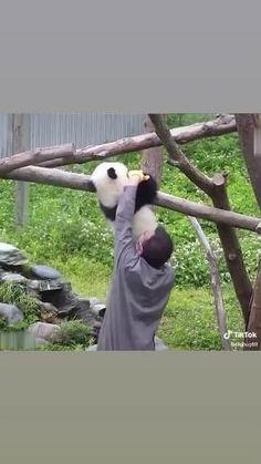 Cute Wild Animals, Cute Little Animals, Cute Funny Animals, Animals Beautiful, Animals And Pets, Panda Funny, Cute Panda, Cute Little Kittens, Cute Cats