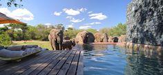 Phinda Homestead, Sudáfrica. Alojamiento en una reserva privada en la región de KwaZulu Natal.  ¡No dejes de viajar!