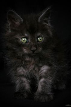 #BlackKitten #CuteKitten #GreenEyedKitten