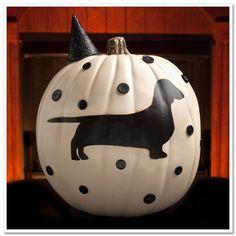 Weenie dog pumpkin :)