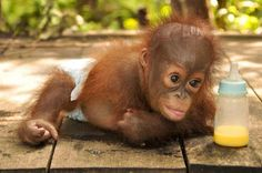 Mobile Uploads - Orangutan Outreach en Français