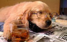 Pupper does a snooze http://ift.tt/2kv9vHp