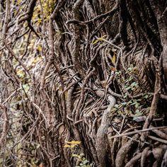 #roots #radici #salento