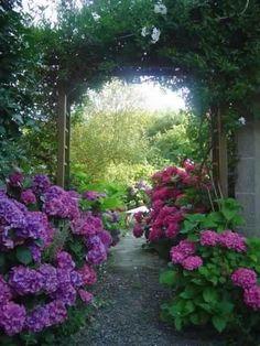 Gorgeous Hydrangeas!