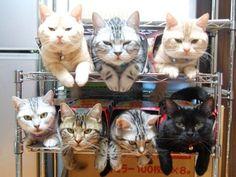 猫が陳列されてる…… on Twitpic - ツイナビ・Twitterガイド