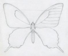 How to Draw Easy Butterflies | How To Draw A Butterfly