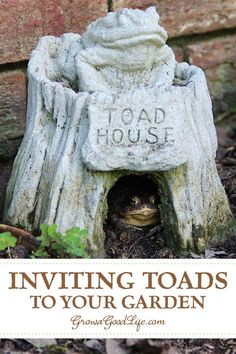 Inviting Frogs and Toads to Your Garden: If you have a pond, brook, or water feature near you, you probably have frogs and toads nearby. Discover ways to attract them to your garden and invite them to stay. #pestcontrol #gardening #organic #vegetablegarden