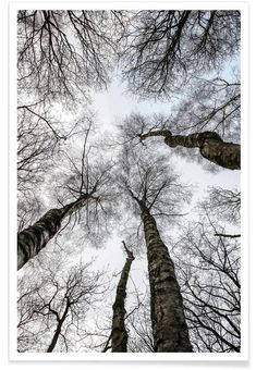 Everglades as Premium Poster by Shot By Clint JUNIQE Everglades en Affiche premium par Shot By Cl Black And White Tree, Black And White Posters, Black And White Pictures, White Trees, City Poster, Nature Posters, Tree Photography, Black And White Photography, Canvas Prints