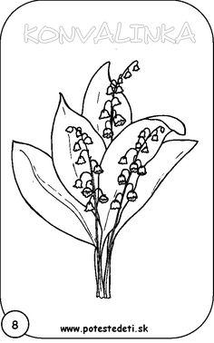 Tulipn Jirhej001