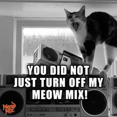 You did not just turn off my Meow Mix!