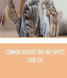 In their old age, cats' kidneys can become damaged. As a result, waste products are no longer filtered effectively, which causes chronic kidney disease. Symptoms include increased thirst, excessive urination, weight loss, decreased appetite and vomiting. Chronic Kidney Disease, Disease Symptoms, Decrease Appetite, Cat Diseases, Sad Cat, Cat Signs, Old Age, Cat Costumes, Kitty