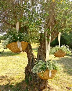 Decor: Outdoor Party - Fiesta al Aire Libre                                                                                                                                                     Más