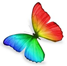 real butterfly png - Google Search