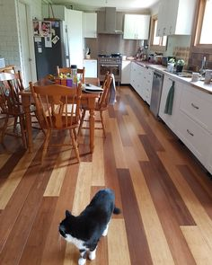 #kitchenrenovation #client #flooring. #bamboo and friendly family #cat. #lighting placement. I've been working with this client for over nine years now. Its nice when you have clients that don't do a thing untill they consult with you. #happyclients #friends now #renos #painting #colours  #www.denovoconcepts.com  #nowra #shoalhaven #interiorstyling #interiordecorator 💻🌱🏠