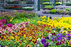 Magical And Beautiful Flower Bed Ideas And Designs Gardening A flower bed is a lovely place to display flowers that you may have gathered from your yard or garden. Flower beds look very pretty and can be beautif... Night Blooming Flowers, Summer Flowers, Annual Flowers, Colorful Garden, Growing Flowers, Flower Beds, Garden Beds, Garden Pond, Organic Gardening